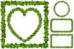 Листья зеленого цвета формы рамки Стоковое Изображение RF