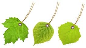 Листья зеленого цвета ярлыка бирки Стоковые Изображения RF
