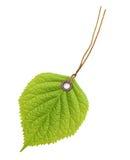 Листья зеленого цвета ярлыка бирки стоковое изображение