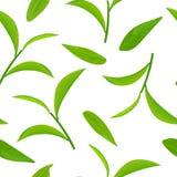 Листья зеленого чая и хворостины, безшовный вектор картины, на белой предпосылке бесплатная иллюстрация