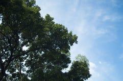 Листья, зеленый цвет, белизна, коричневый цвет, деревья, тени, чернота, синь, ветви, небо, предпосылка, космос стоковые изображения rf