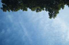 Листья, зеленый цвет, белизна, коричневый цвет, деревья, тени, чернота, синь, ветви, небо, предпосылка, космос стоковое фото