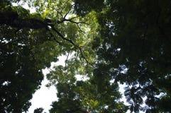 Листья, зеленый цвет, белизна, коричневый цвет, деревья, тени, чернота, синь, ветви, небо, предпосылка, космос стоковые фотографии rf
