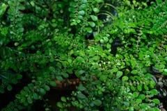 Листья зеленых растений 2 Стоковые Фотографии RF