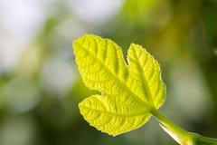 листья знамени зеленые стоковое фото rf