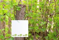 листья знамени предпосылки Стоковое Фото