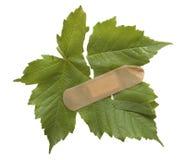 листья значка Стоковые Изображения