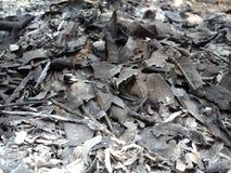Листья золы Стоковая Фотография