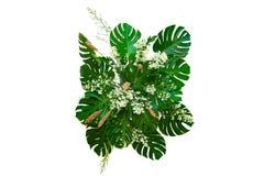 Листья изверга используемые в заводе листвы листьев современных дизайнов тропическом bush изолированный фон природы цветочной ком стоковое изображение rf