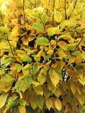 Листья изменяя цвет осенью стоковые фотографии rf