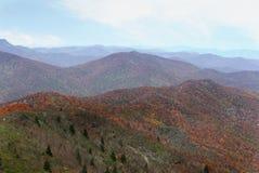 Листья изменяя цвет Стоковое Изображение