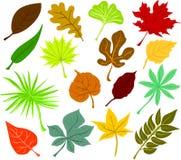 листья икон Стоковое фото RF