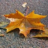 листья иллюстрации компьютера предпосылки осени стоковые фото