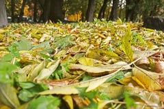 листья иллюстрации компьютера предпосылки осени стоковая фотография rf