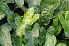 Листья длинного зеленого цвета в саде Стоковые Фото