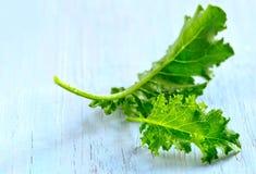 Листья листовой капусты Стоковая Фотография RF