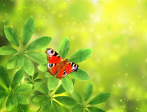 Листья и бабочка зеленого цвета на солнечной предпосылке Стоковые Изображения