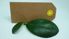 Листья и бирка Стоковое фото RF