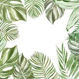 Листья и ветви акварели тропические на белой предпосылке с космосом для текста Экзотическая рамка зеленых растений иллюстрация вектора