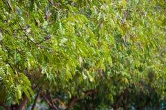 Листья и ветви зеленого цвета Стоковые Изображения RF