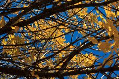 Листья и ветви осени под ярким солнцем Стоковое фото RF