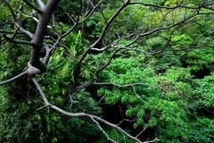 Листья и ветви Стоковые Фотографии RF