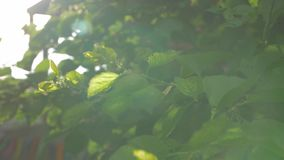 Листья и ветер солнечного луча сток-видео