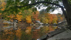 Листья и вода Стоковые Фотографии RF