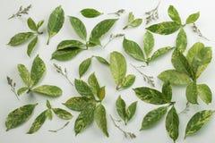 Листья и высушенные цветки на белой предпосылке стоковое изображение