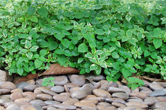 Листья и гравий зеленого цвета стоковые изображения