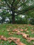 Листья и дерево Стоковое Изображение