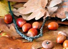 Листья и жолуди дуба стоковое фото