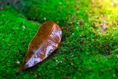 Листья и зеленая предпосылка мха, дерево с зеленым мхом вебсайт обоев пользы tan 2 теней представления приглашения иллюстрации на Стоковые Изображения RF