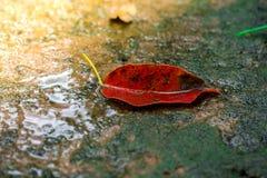 Листья и зеленая предпосылка мха, дерево с зеленым мхом вебсайт обоев пользы tan 2 теней представления приглашения иллюстрации на Стоковое Фото