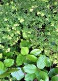 Листья и иглы вечнозелёного растения стоковое фото rf