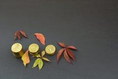 Листья и монетки на черной предпосылке Стоковое фото RF