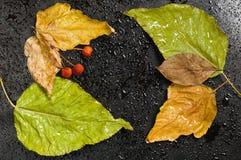 Листья и одичалые яблоки упаденные осенью на черноте Стоковые Изображения RF