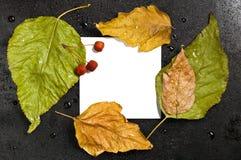 Листья и одичалые яблоки упаденные осенью на черноте Стоковое Фото