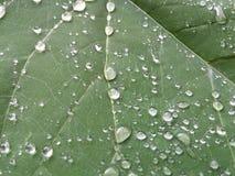 Листья и падения Стоковое Изображение