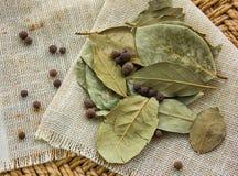 Листья и перец залива Стоковое фото RF