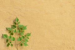 Листья и песок Стоковое Фото