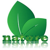 Листья и письма зеленого цвета Иллюстрация штока