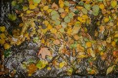 Листья и пузыри осени стоковая фотография rf