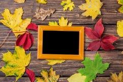 Листья и рамка Стоковое Фото