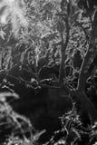Листья и света стоковые фото