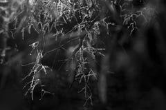 Листья и света стоковые изображения rf
