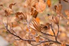 Листья и семена осени Стоковые Фото