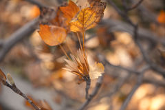 Листья и семена осени Стоковое Фото