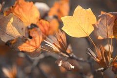 Листья и семена осени Стоковое фото RF