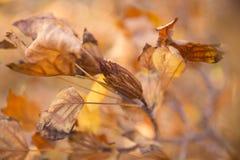 Листья и семена осени Стоковые Изображения RF